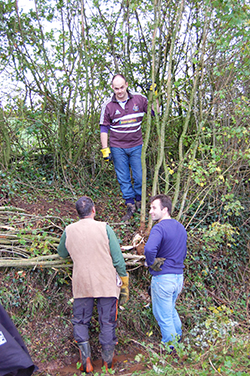 devon hedgelaying course